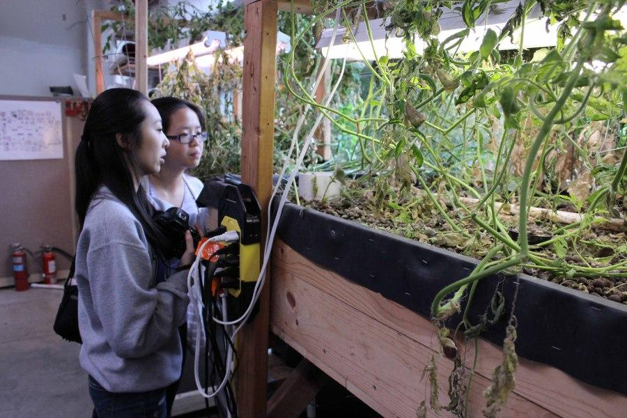 Independent research project furthers efforts towards sustainability at Liberty